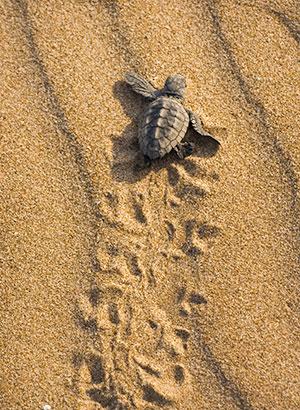 Vakantie Boa Vista (Kaapverdië): natuur
