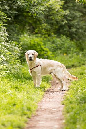 Weekendje weg met de hond: vakantieparken