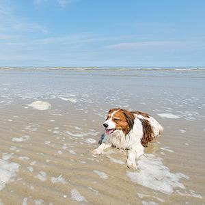 Weekendje weg met de hond: vakantieparken in Nederland