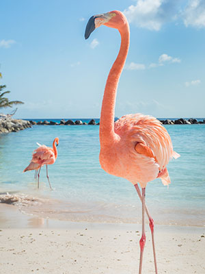 8x doen Aruba, Flamingo Beach