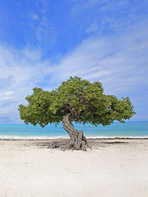 8x doen Aruba, strand