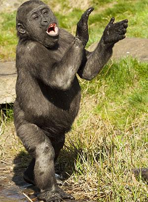 Weekendje weg met kinderen: apenheul