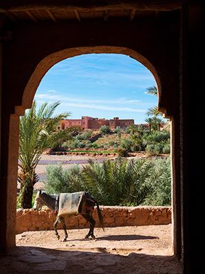 Winterzon vakantie in Agadir