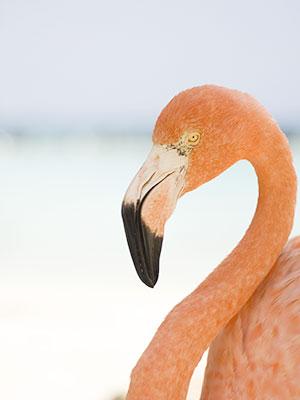Vakantie ABC-eilanden: Aruba