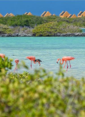 Vakantie ABC eilanden: Bonaire