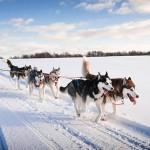 Wintervakantie Lapland: wintersport, maar dan anders…
