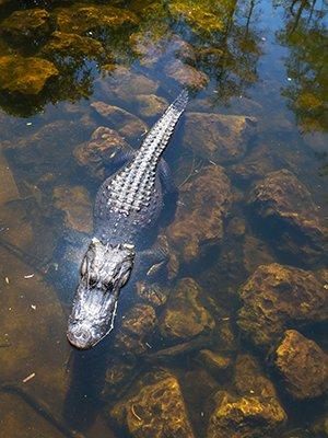 Bezienswaardigheden Miami: Everglades