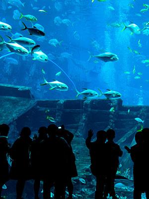 Dubai voor kinderen: aquarium