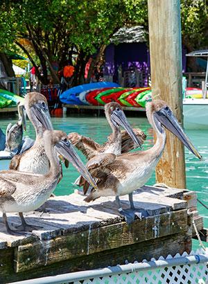 Floriday Keys: Islamorada