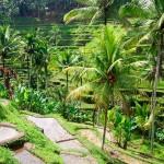 13 waanzinnige dingen om te doen op Bali