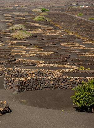 La Geria, wijngebied Lanzarote