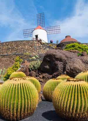 Lanzarote, César Manrique; cactustuin