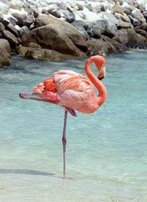 Plekken Aruba: Renaissance eiland