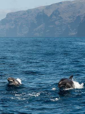Romantisch Tenerife: dolfijnen