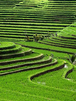 Redenen bali bucketlist Bali, rijstvelden