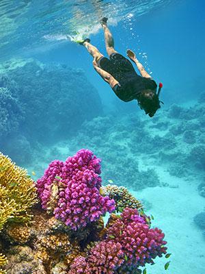 Vakantie Marsa Alam, duiken