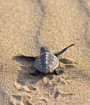 Mooiste stranden Cyprus, Turtle Beach