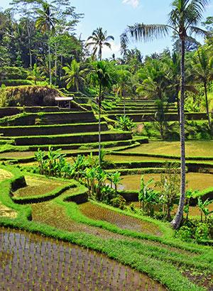 Doen in Ubud: Tegalalang
