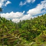 Ubud, culturele hart Bali