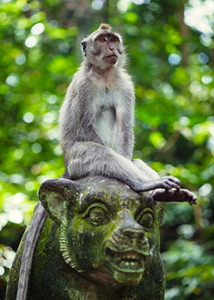 Ubud, Bali: Monkey Forest