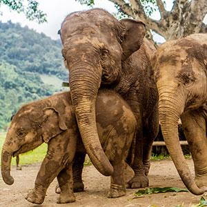 Vakantie Chiang Mai, Noord-Thailand; Elephant Nature Park