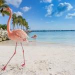 Roze flamingo's Aruba
