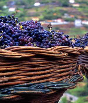 Doen op Madeira: wijn drinken