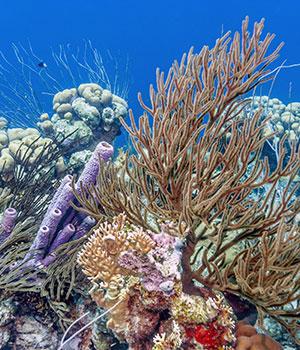 Doen op Bonaire, koraalriffen