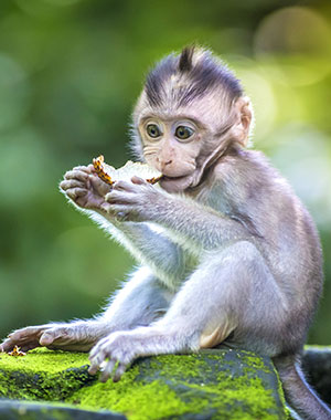 Wat is Monkey Forest Ubud