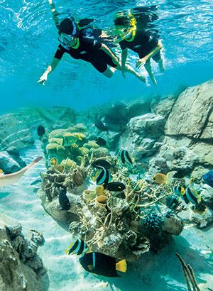beste attractieparken ter wereld: Discovery cove