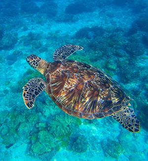 Nationaal Park Wadi El Gemal, schildpadden