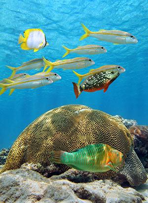 Wat te doen op Bonaire, koraalriffen