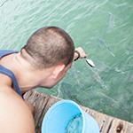 Bezienswaardigheden Florida, Florida Keys