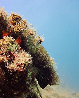 Mooiste duikspots Hurghada