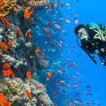 Een duik onderwater! De mooiste duikspots van Hurghada