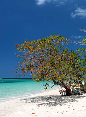 Vakantie Negril, Jamaica