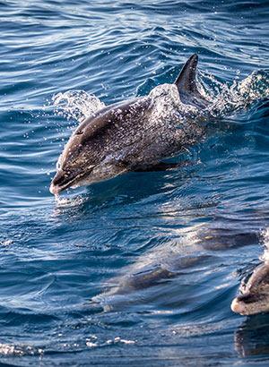 Gran Canaria met kinderen, dolfijnen spotten