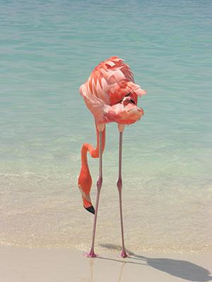 Dieren spotten op vakantie, Flamingo