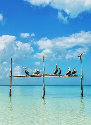 Favoriete bounty-eilanden: Isla Holbox (Mexico)
