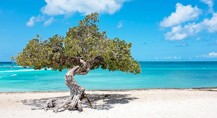 Natuur Aruba
