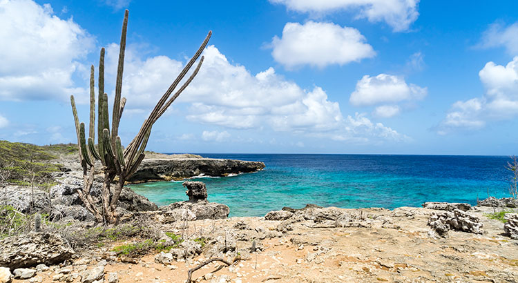 Washington Slagbaai Nationaal Park Bonaire