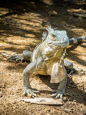 Washington Slagbaai Nationaal Park, Aruba: dieren