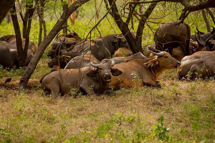 Safari in Senegal
