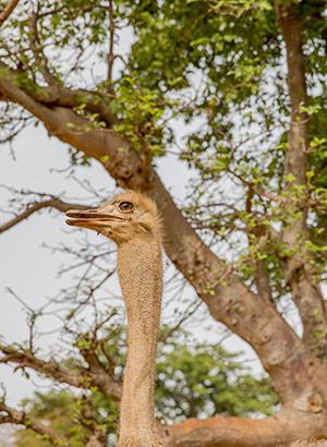 Safari Senegal: dieren spotten