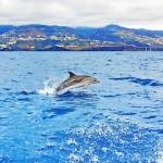 Het water op! Walvissen & dolfijnen spotten rond Madeira