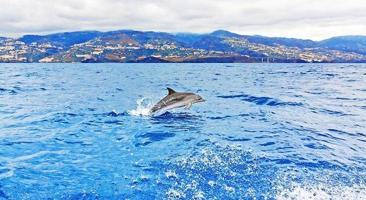 Walvissen en dolfijnen spotten Madeira