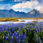 7 dingen die je misschien nog niet wist over IJsland