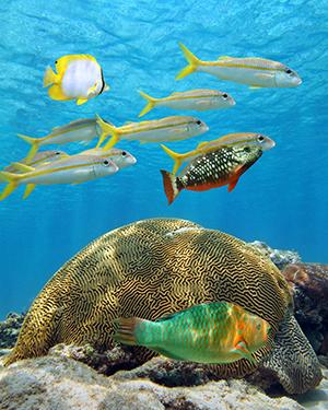 Aruba met kinderen: snorkelen