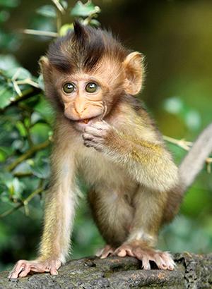 Bali met kinderen: Monkey Forest