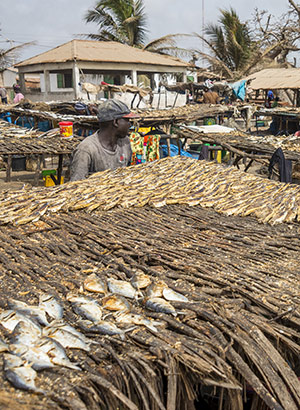 Excursies Gambia: markt Tanji